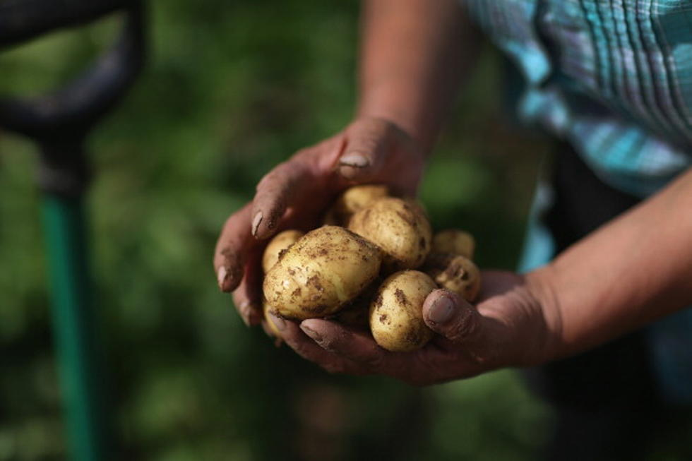 Old People Used A Potato To Heal Everything From Fevers To Burns, It