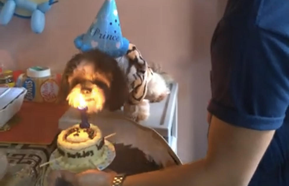 Dog Blows Candle Out On Birthday Cake