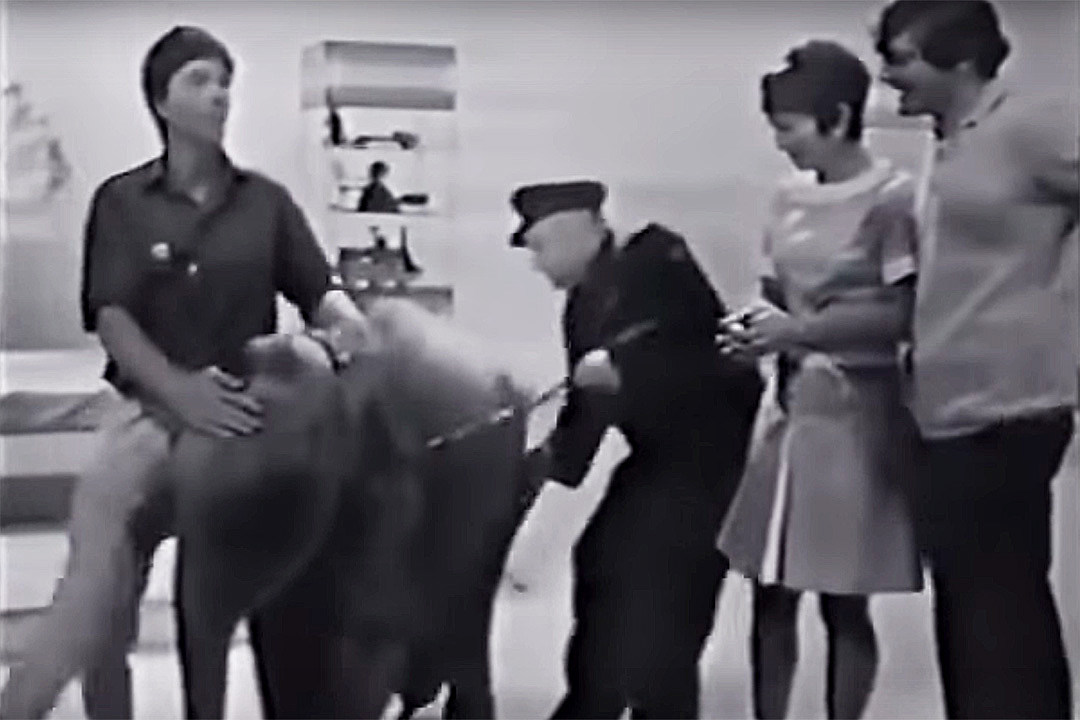 50 Years Ago: A Baby Elephant Brings British TV to a Standstill