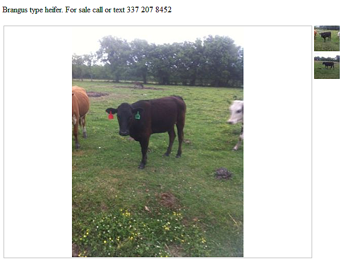 Pet Shopping In Lafayette On Craigslist