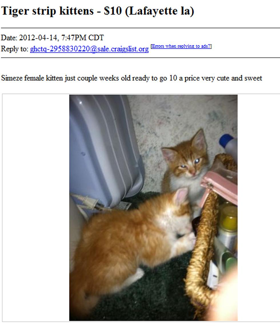 Found Cat Craigslist