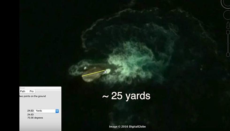 Giant 'Sea Creature' Spotted Off Antarctica By Google Earth