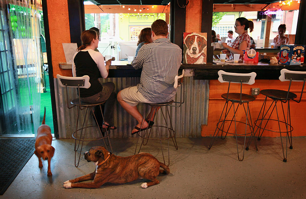 Yes You Can Bring Your Dog To These Restaurants In Lafayette