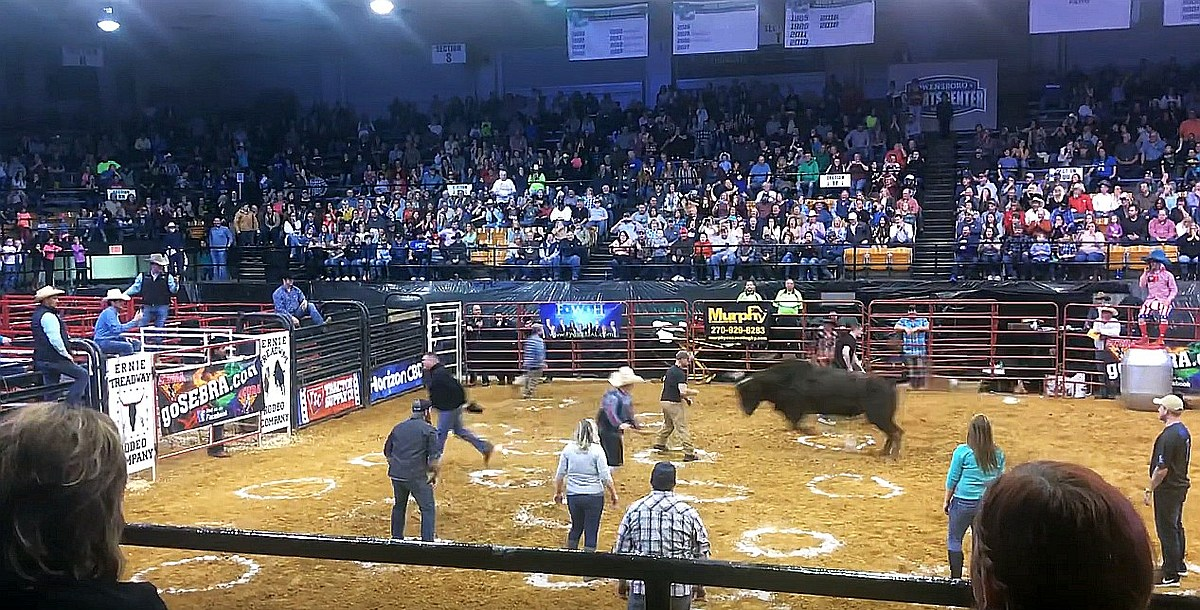 Cowboy Pinball Game Shocks Crowd At Rodeo Graphic Video