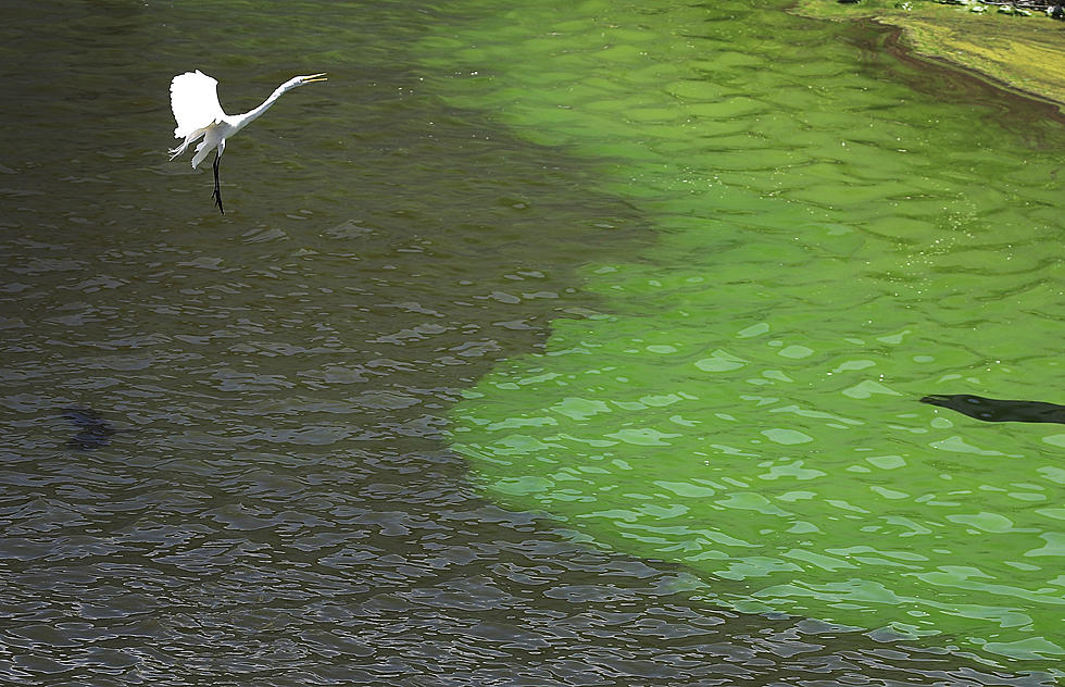 Toxic Bacteria Affecting Mississippi Beaches