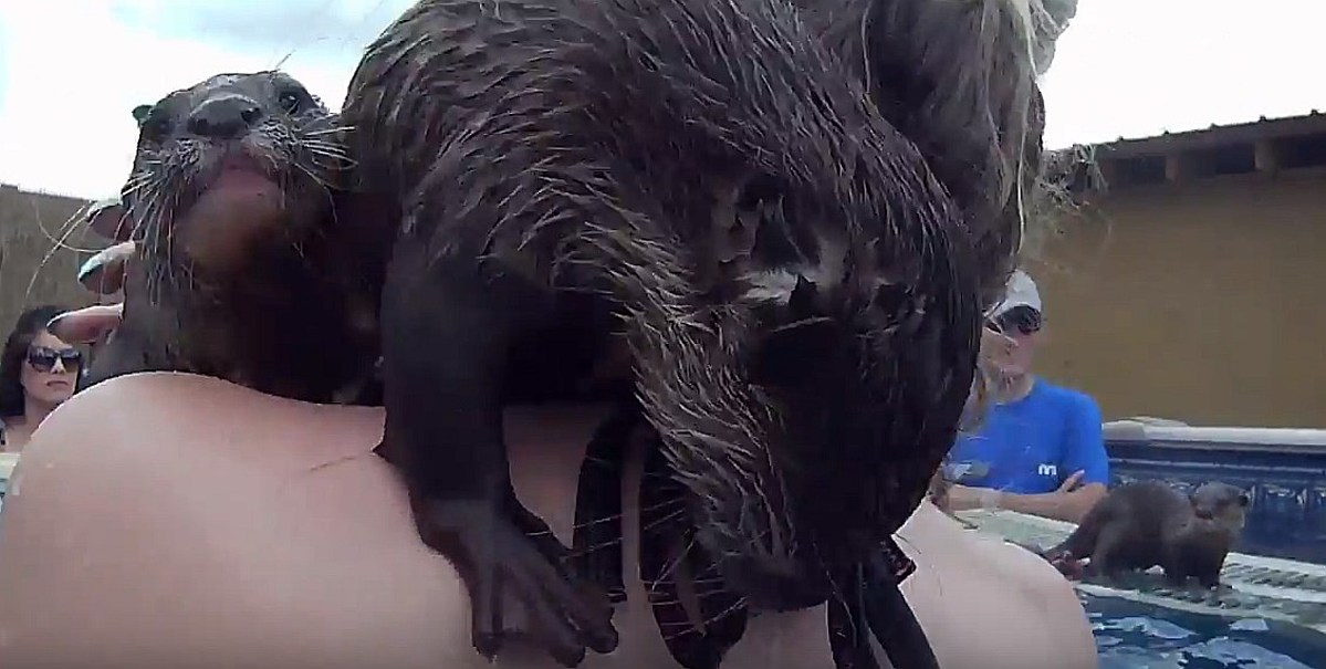 Swim With Tiny Otters? You Can at Louisiana's Barn Hill ...