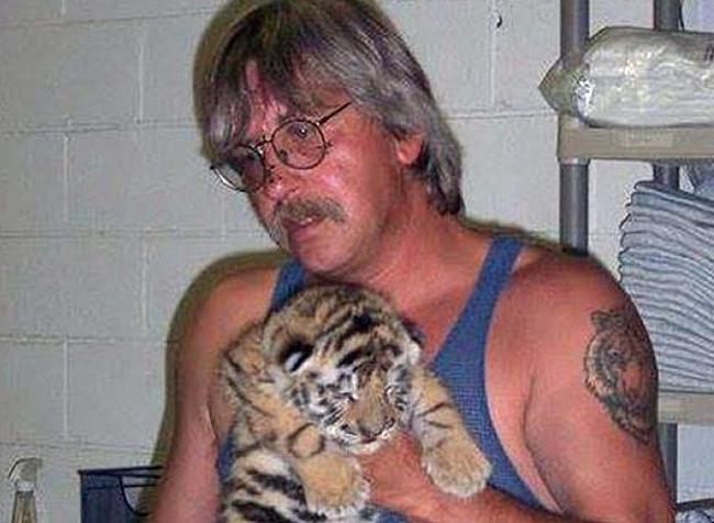 Tiger Drinking Water In Public Bathroom