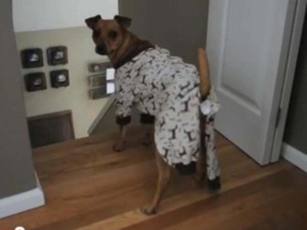 Witness a Day in the Life of Monkey the Rescue Dog [VIDEO]