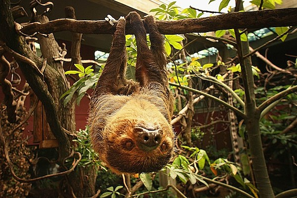 10 Things You Probably Didn T Know About Sloths