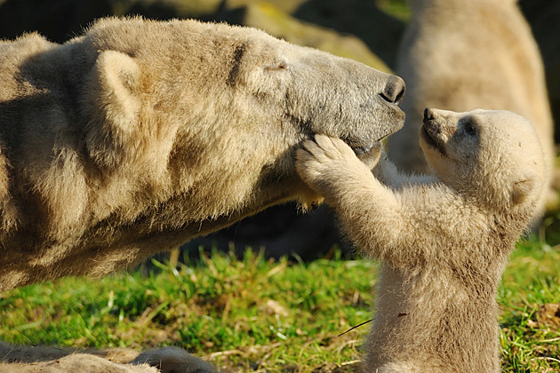 Image result for baby and mama animal pic