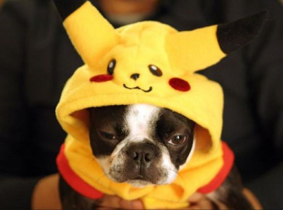 Get Ready For Halloween With Smush Faced Dogs In Costumes