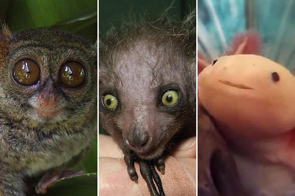 Weird Yet Cute Animals 1
