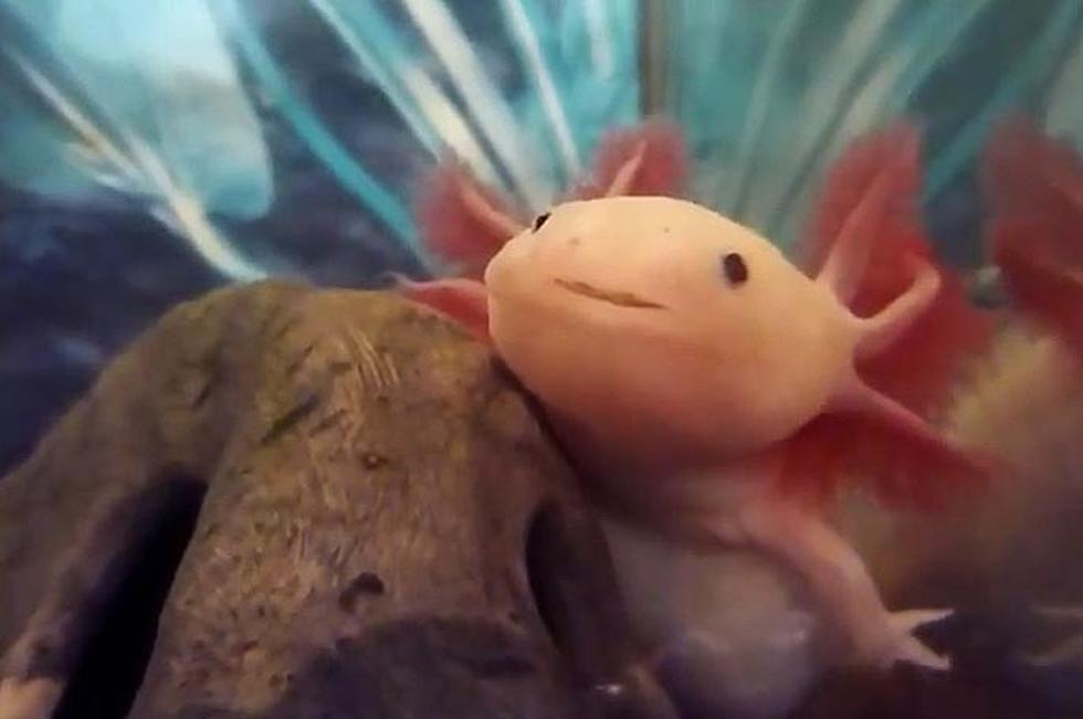 Weird Yet Cute Animals 9
