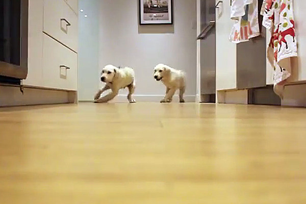 Timelapse Of Puppies Running For Dinner Is Just Too Cute