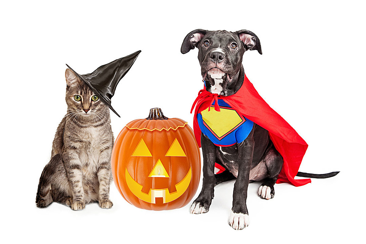 Pets in Halloween Costumes Are All Treats, No Tricks