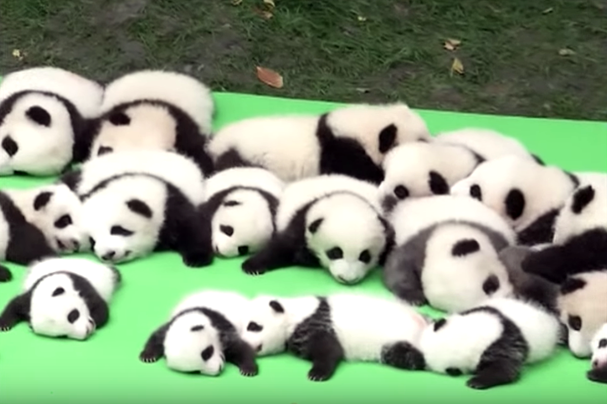 23 Baby Pandas Live In This Adorable Baby Panda Nursery