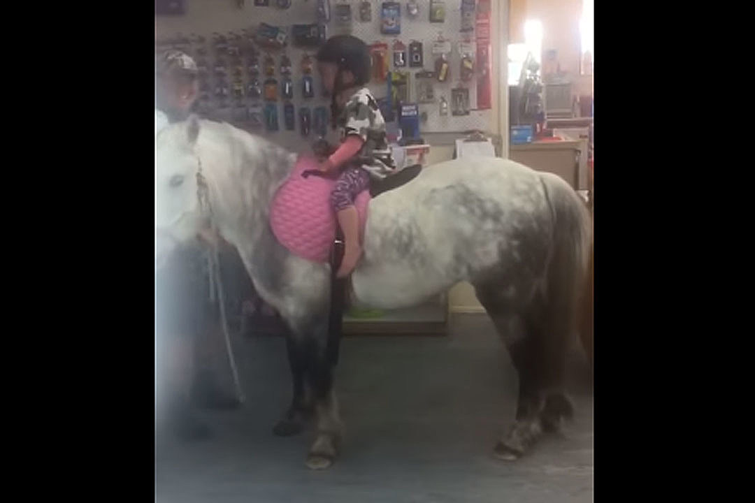 3f1a45176ed2 So a Man Walks His Horse Into an Oklahoma Tractor Supply Store...
