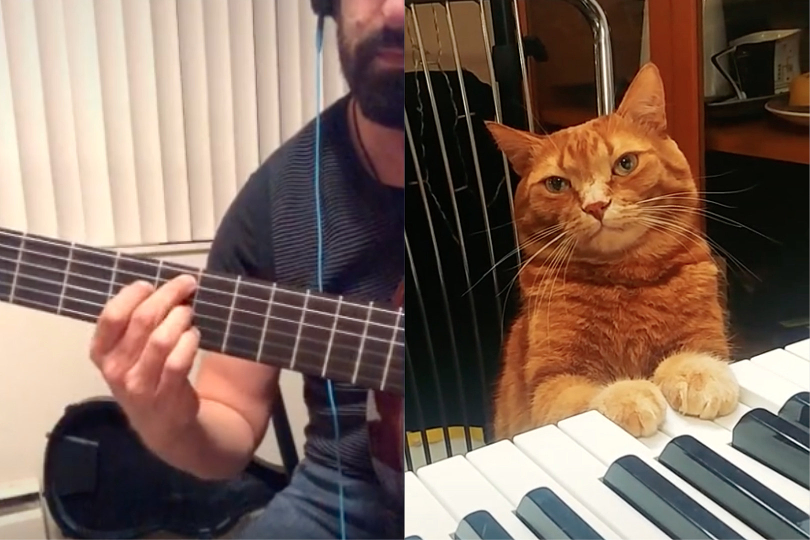A Cat That Plays Piano Is Collaborating With Musicians on TikTok