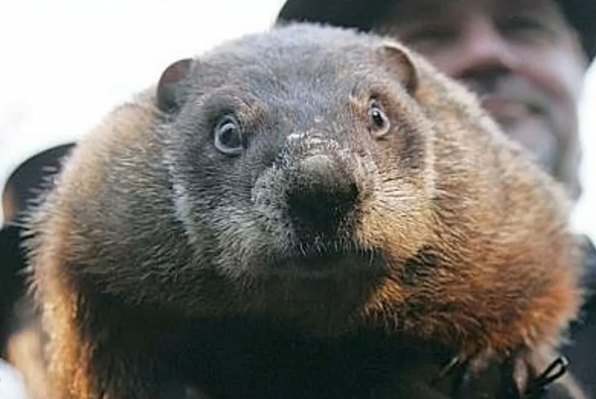 5 Things You Didn't Know About Groundhogs