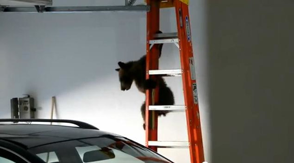 The Cutest Bear-Stuck-In-Garage Video You Will See All Day ...