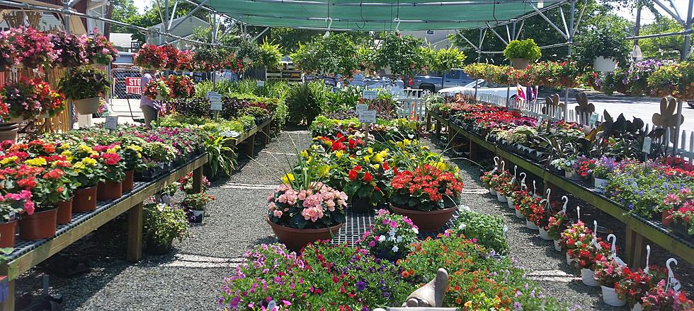 Use These Plants And Herbs To Keep Bugs Away Nj Garden Centers Say