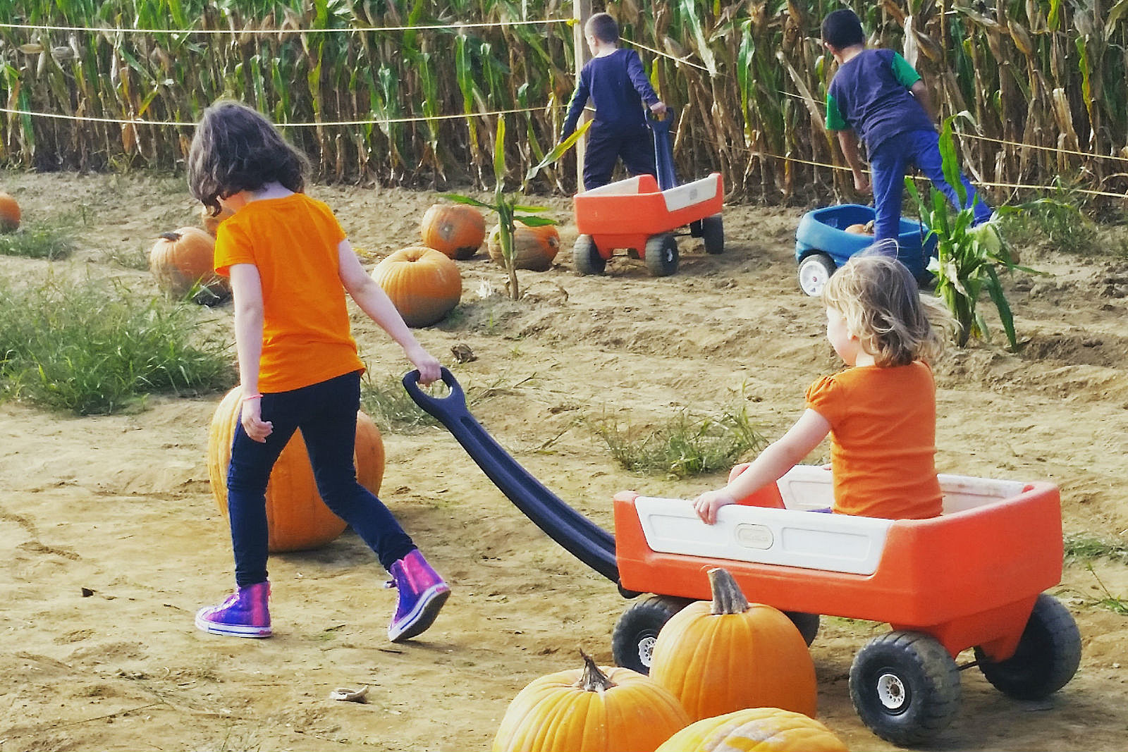Best Nj Pumpkin Patches Hayrides Corn Mazes For 2017