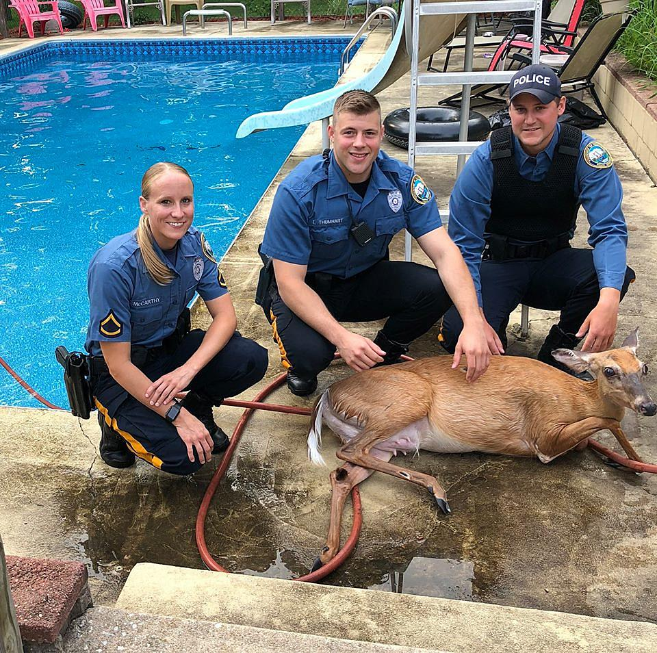 Even New Jersey deer need a dip in the pool now and then