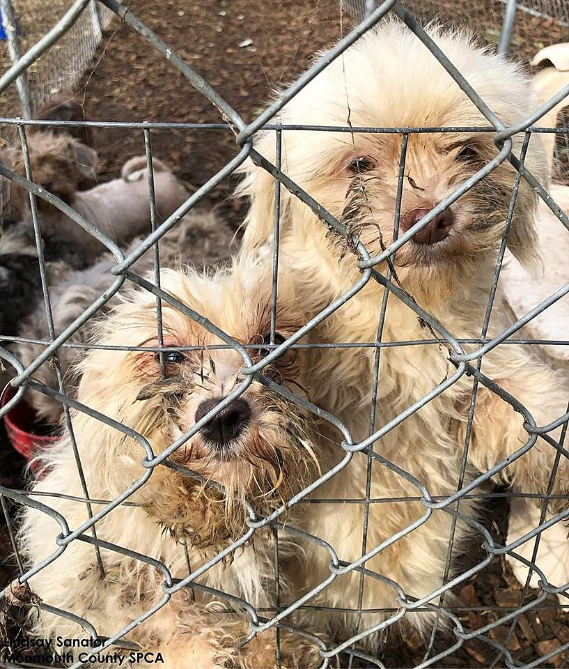NJ State Police uncover awful animal hoarding case in Shamong