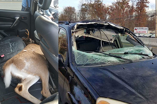 Deer Crashes Through NJ Womans SUV Ends Up In Back Seat