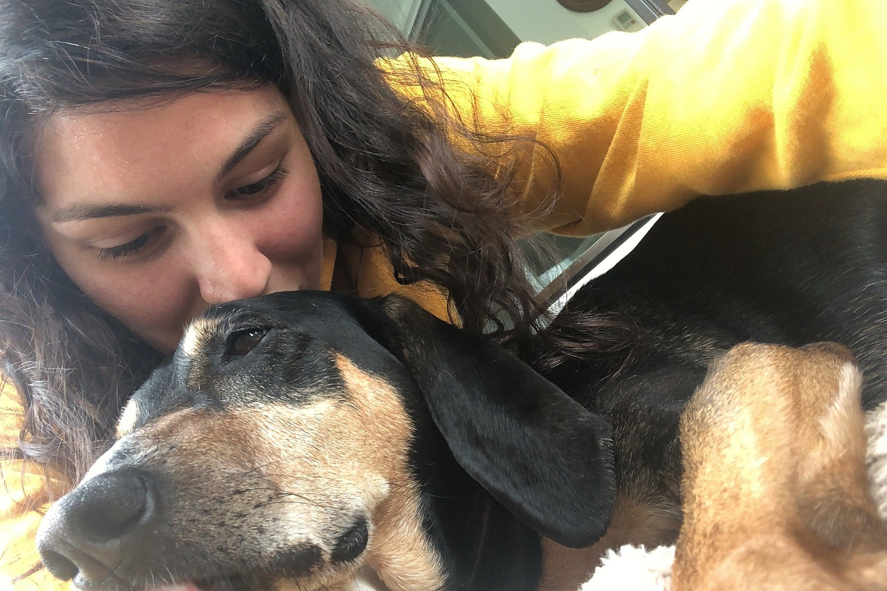 Dog With Cancer Ran Away After Surgery But Good News