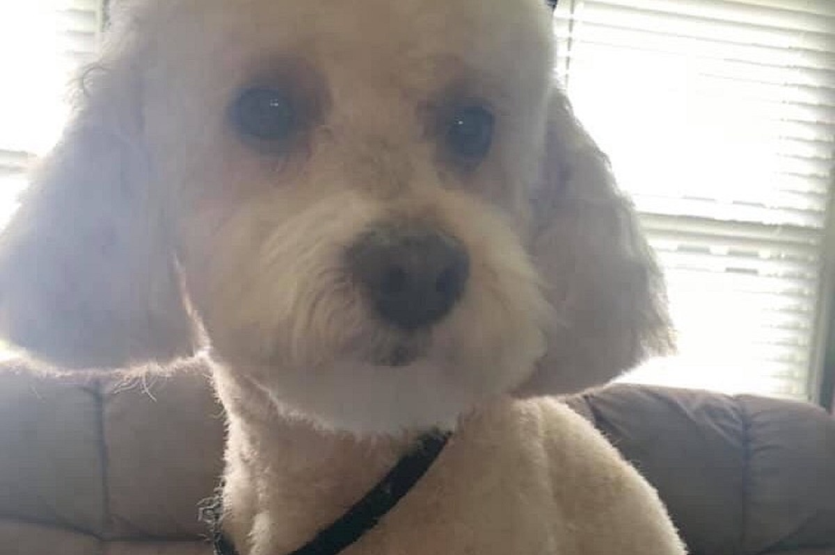 'Sweetest little dog' in South Jersey dies after being found shot in head
