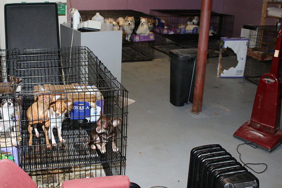 Cops Say 130 Pets Rescued From Illegal Mill In Scotch Plains Home