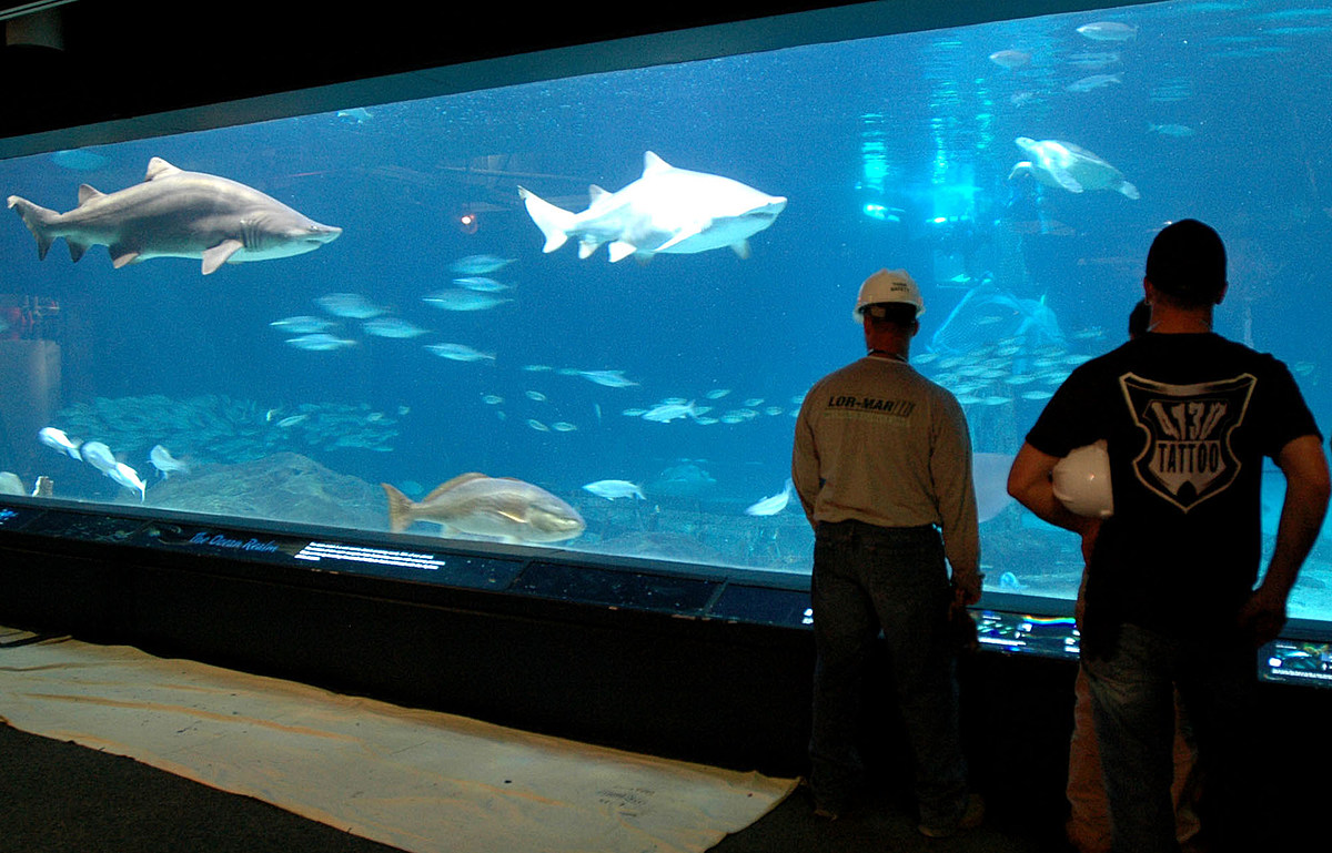 Adventure Aquarium is reopening and here's what you need to know