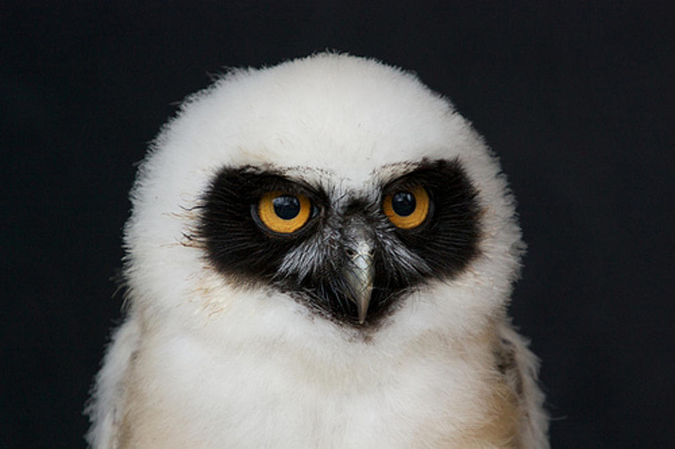 What Do You Call a Baby Owl?