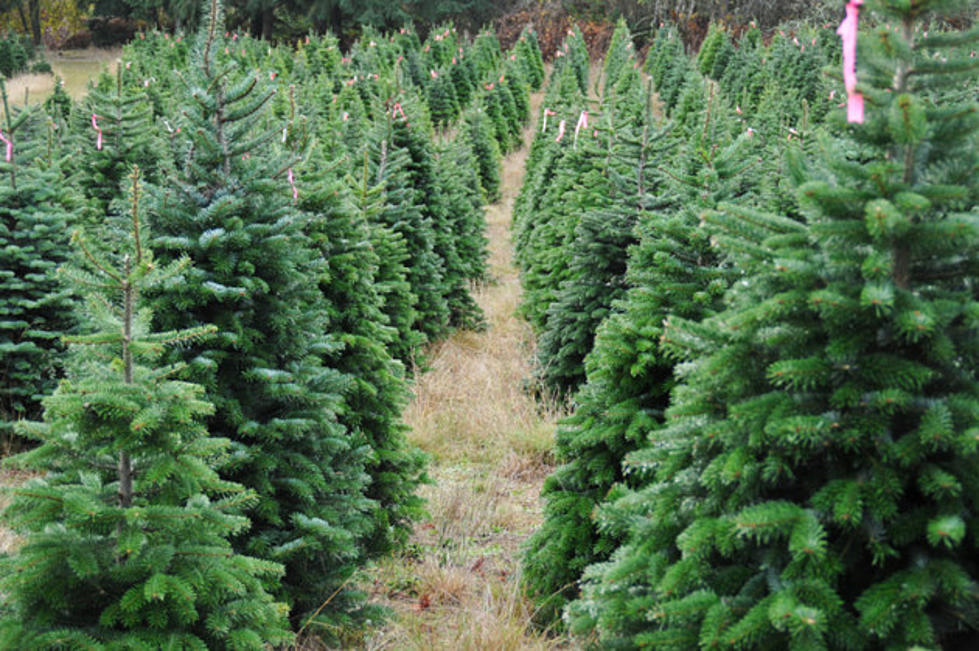 Real Christmas Trees Near Me.Where To Get Your Real Christmas Tree In Central New York