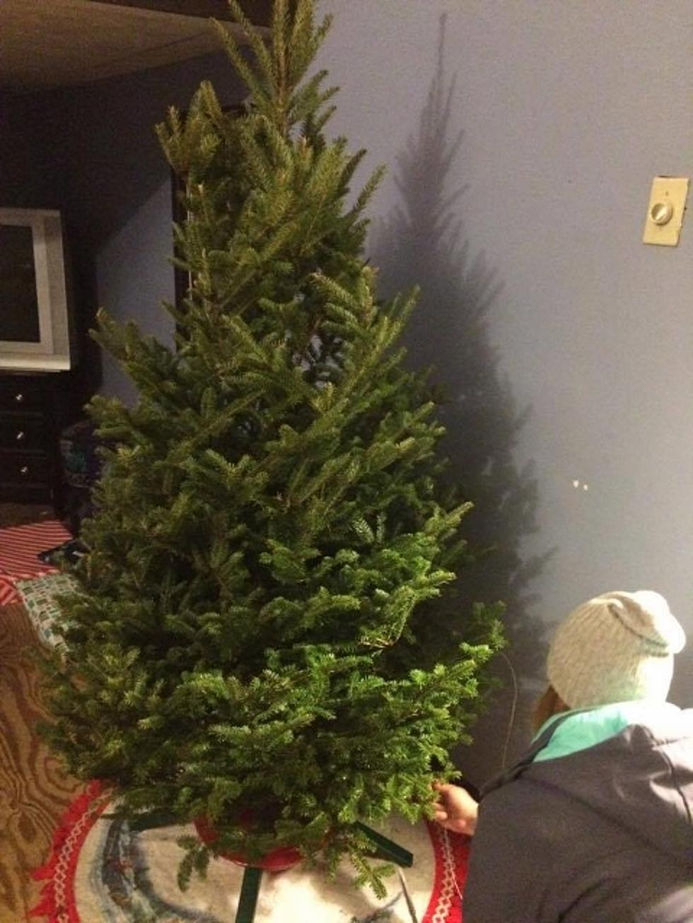 Real Christmas Tree.Dos Don Ts Of Buying And Caring For A Real Christmas Tree