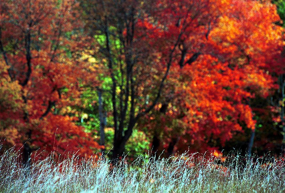 Foliage Map New York 2017.New York 2018 Fall Foliage Map