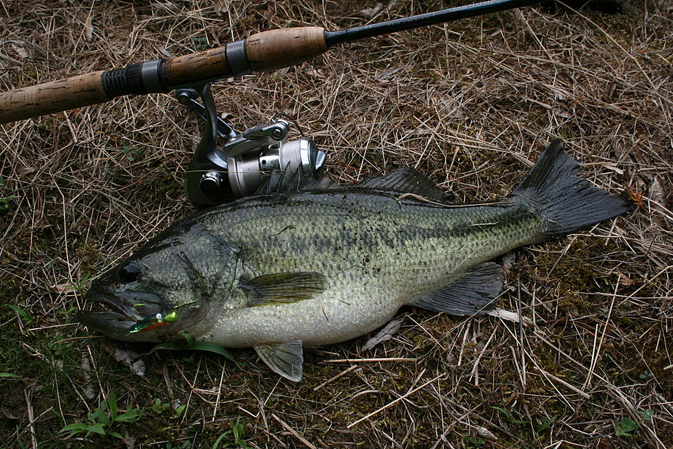 It's Time To Catch The Biggest Bass In New Jersey