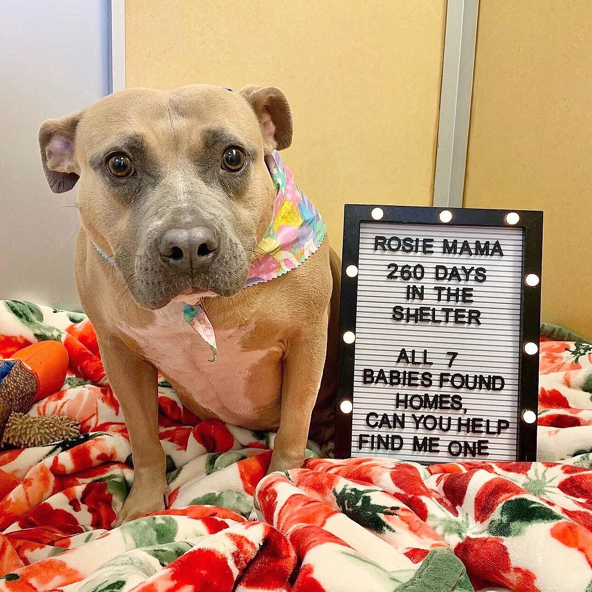 Mama Dog Overlooked in a Shelter for Over 260 Days