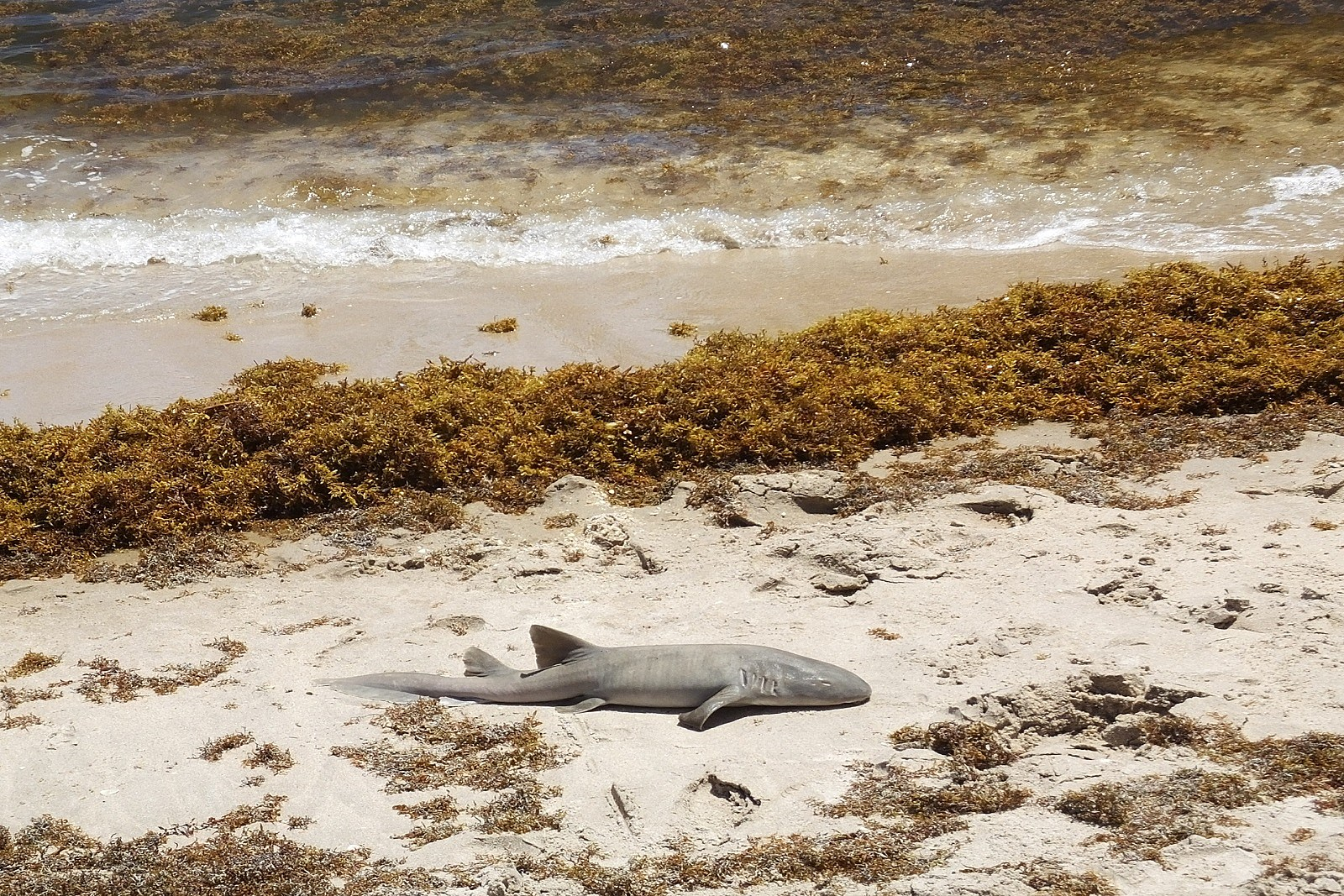 Dead Sharks Wash Up on South Jersey Beaches