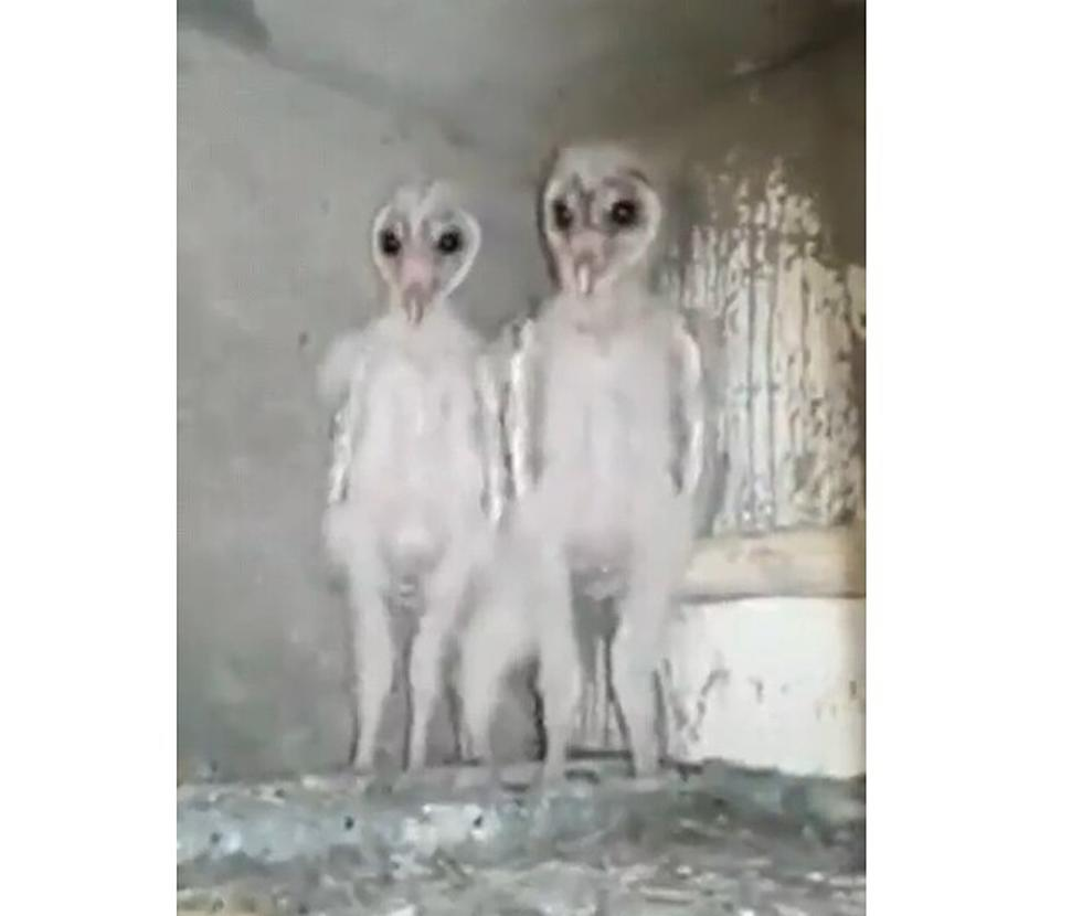 Owls In The Attic Here S The Creepiest Thing You Will See Today