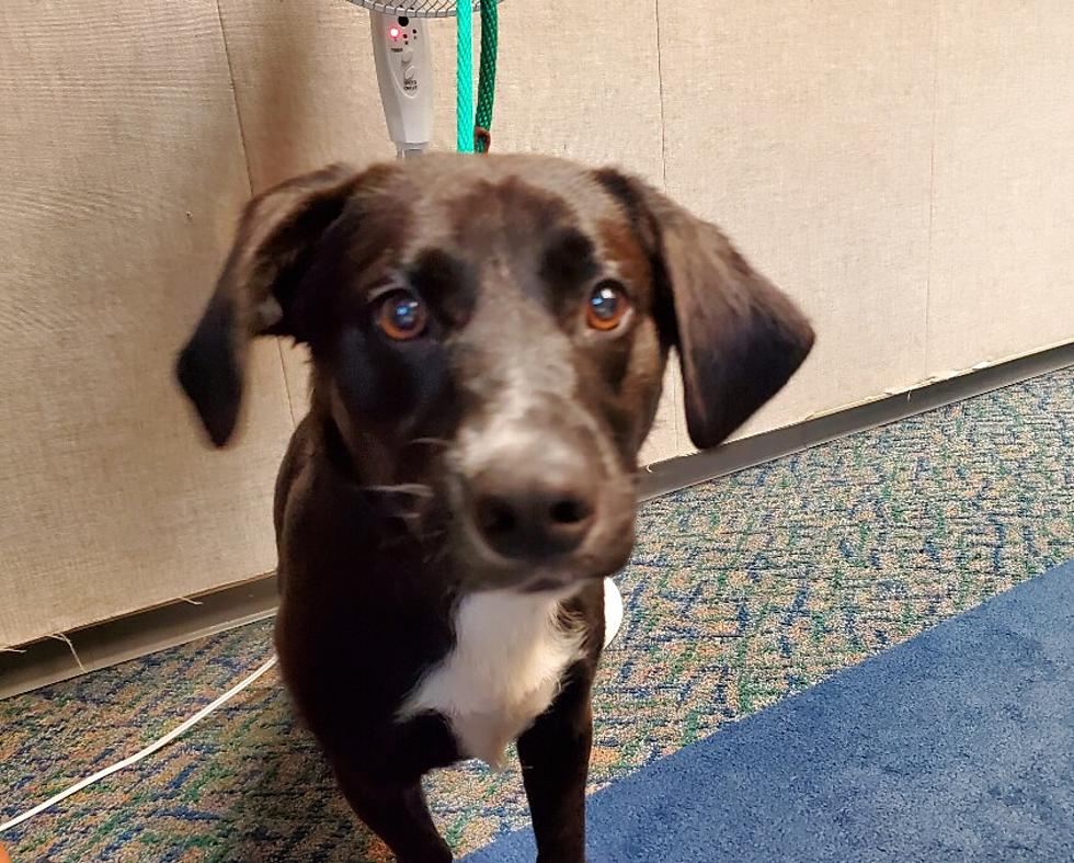 Atlantic County Animal Shelter Waiving Adoption Fees This