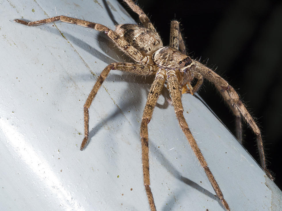 5 Creepy Crawlers To Watch Out For In Your South Jersey Home