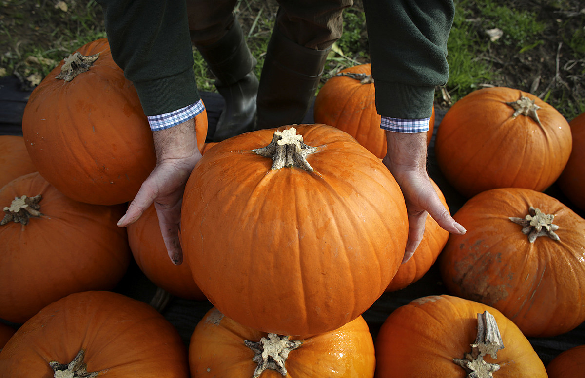 Tips for Carving The Best Pumpkin?