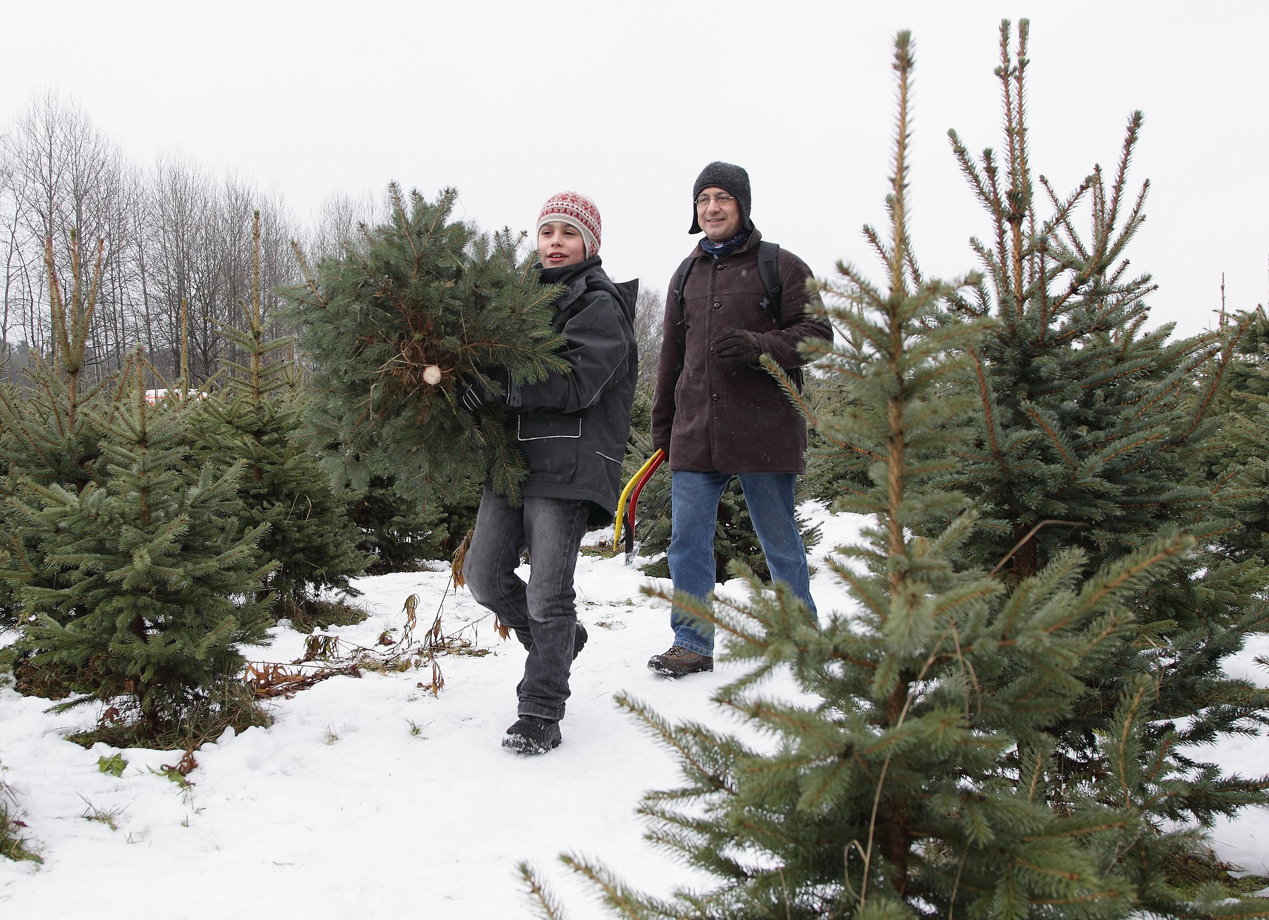 Christmas 2020: Where to Get U Cut & Fresh Trees in Utica Rome