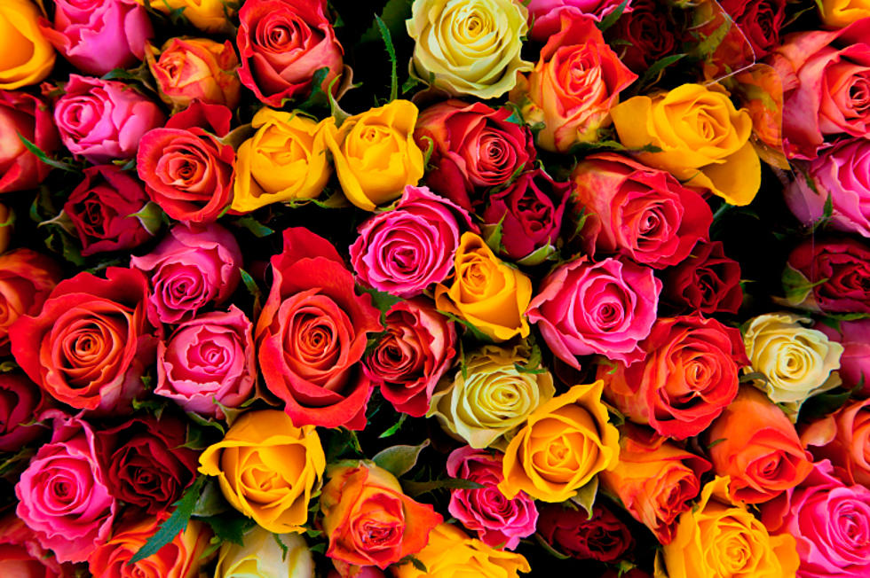 What Do The Different Colors Of Roses Mean