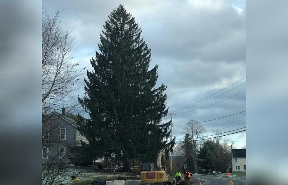2020 Rockefeller Center Christmas Tree Coming From West Oneonta