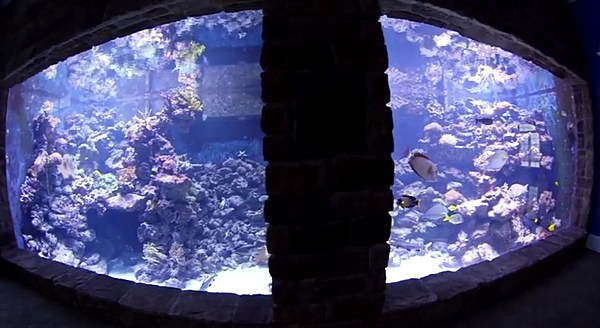 A Man Built the Largest Privately Owned Aquarium in North ...