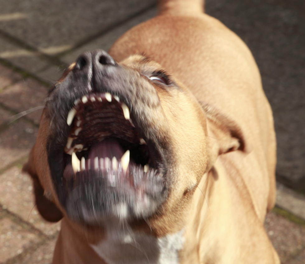 Michigan Bill Would Create a 'Dangerous Dog' Registry to