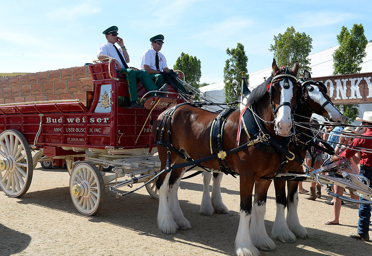 Visit the Budweiser Clydesdales in West Michigan this Weekend!